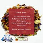 infuso-alice-info